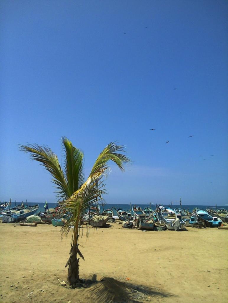Spondylus, Playa, Ecuador, Palmera, Barca, Mar