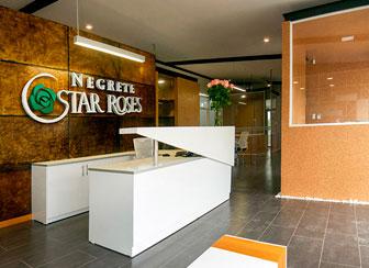 Oficinas Negrete Star Roses